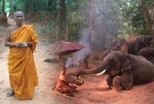 ยืนยันภาพโขลงช้างหมอบกราบพระธุดงค์ เรื่องจริง!