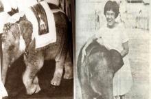 เปิดเรื่องเล่า พระเศวตสุรคชาธารฯ ช้างเผือก ประจำรัชกาลที่ 9