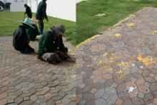 วอนปชช.ช่วยกันดูแลรอบพระบรมมหาราชวัง หลังพบหญ้าไหม้ ร่องรอยน้ำตาเทียน