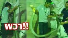 จับงูจงอางยักษ์ ยาว 5 เมตร เลื้อยเข้าบ้านที่อ่าวลึก ผวา อาทิตย์เดียวเจอ 10 ตัว(คลิป)