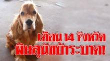 """ปสุสัตว์เตือน 14 จังหวัด """"พื้นที่สีแดง"""" เขตโรคพิษสุนัขบ้าระบาด เฝ้าระวังอีก 42 จังหวัด"""