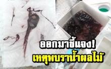 ทิปโก้แจง เหตุพบสิ่งแปลกปลอมในน้ำผลไม้ ยันผลิตปลอดภัยทุกขั้นตอน!