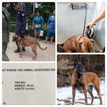 ชาวเน็ตงงสุนัขตำรวจผอมโซ..ดูแลยังไง!! จนตำรวจต้องชี้แจง