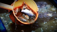 คืบหน้า งูในถุงปลาร้า! สธ.บุกตรวจ