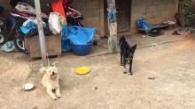กรมปศุสัตว์ แจง ฆ่าหมา แมว 200 ตัว ไม่ใช่การทารุณกรรมสัตว์แต่คุมพิษสุนัขบ้า!