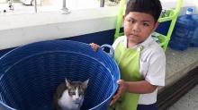น่ารักเชียว!! เด็กอนุบาลแอบเอาแมวใส่กระเป๋ามาโรงเรียนด้วย