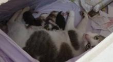 อ่างทองแห่ดู แม่แมวคลอดลูกในโลงศพแก้ปีชง