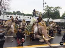 ตระการตา!!ช้างจากอยุธยาแต่งเต็มยศ เข้าถวายสักการะ พระบรมศพ