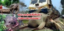 ชีวิตที่น่าสงสารของช้างไทย!!!! ฝรั่ง Amazing ช้างไทยแต่เหมือนคนบางกลุ่มยังไม่เห็นค่าชีวิตพวกมันเลย
