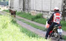 นั่นอาชา! หนุ่มขับกระบะตกใจสุดขีด ม้าวิ่งตัดหน้ารถกลางเมืองบ้านโป่ง