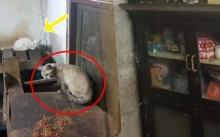 ลุงวัย 62 เอาอาหารไปให้แมว แต่มันไม่ยอมกิน เลยสงสัย? พอมองไปรอบๆห้อง เจอเข้าเต็มๆตา!!!