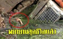 หัวหน้าคนงานขับรถแบ๊กโฮขึ้นเทลเลอร์พลาด คว่ำตกร่องน้ำ!! กระโดดหนีสุดชีวิตแต่สุดท้ายไม่รอด!!