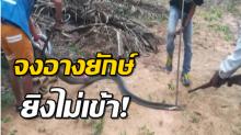 ระทึก! จงอาง 4 เมตรโผล่ ชาวบ้านคว้าปืนจ่อยิง-แต่ไม่เข้า เชื่อเป็นงูเจ้าที่