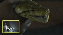 ชาวบ้านขวัญผวา!! พบ งูเหลือมข้ามสายพันธุ์ เลื้อยชูคอจะ ฉก คน!!