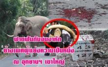 ฟาดฟันกันจนงาหัก ช้างเพศผู้แย่งความเป็นหนึ่ง ณ อุทยานฯ เขาใหญ่