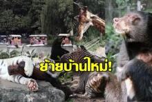 ถึงบ้านใหม่แล้ว! สัตว์ชุดแรกจากเขาดิน ถึงสวนสัตว์ขอนแก่น ร่าเริงทุกตัว