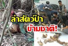 รวบจับ! พรานเวียดนามล่าเสือโคร่งในไทย ตามใบสั่งเครือข่ายลักลอบค้าสัตว์ป่าข้ามชาติ