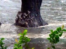 คนกรุงเช็คด่วน!5ถนนเสี่ยงน้ำท่วม ตำรวจจัดเวรเฝ้าระวัง24ชม.
