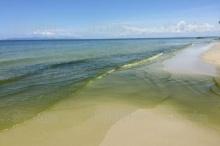 เขียวทั้งหาดราชการุณย์!! นักวิชาการชี้แพลงก์ตอนบูม-รอพิสูจน์น้ำ