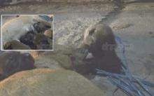 ภาพสุดสลด!! ลูกหมาตัวน้อยนับสิบแย่งกันดูดนมแม่ที่นอนตาย-หลังถูกยิง