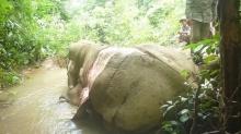นี่เหรอมนุษย์!! ถลกหนังช้างแปรรูปส่งตลาดจีน