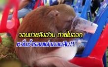หวั่นซ้ำรอยเต่าออมสิน!! วอนช่วยลิงอ้วน ถ่ายไม่ออก คาดกินเหรียญเงินบริจาค! (คลิป)