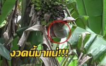 งวดนี้มาแน่!!! ชาวบ้านแห่ขอเลขเด็ด ปลีกล้วยเหมือนปลัดขิก!!