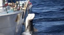 ผลวิจัยพบหาก ฉลาม สูญพันธ์ุ จะสร้างผลกระทบอย่างคาดไม่ถึงในระบบนิเวศน์