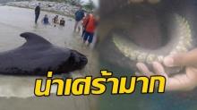 สุดช็อก! วาฬเกยตื้นคลอง ผ่าซากแล้วพบสิ่งนี้คนเห็นถึงกับน้ำตาไหล!!