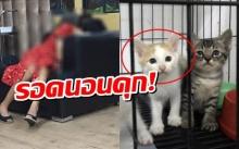 รอดนอนคุก! 'ดีเจฆ่าแมว' ยื่น4หมื่นให้ประกันตัว ชิ่งหนีสื่ออีกรอบ