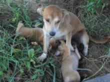 เหลือเชื่อ!!เป็นหนี้บุญคุณหมา พ่อเฒ่ารอดตาย...เพราะนมแม่หมา