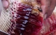 อ.เจษฎาเผยน้ำผึ้งสีเลือดแปลก..แต่ไม่ประหลาด!!
