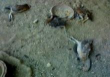 สยบข่าวลือ!! ปอบ - กระสือ กินไก่ชาวบ้านที่อยุธยา ที่แท้...สุนัขจรจัด