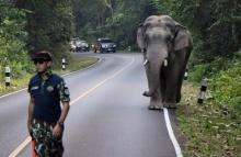 ช้างขวางถนนเขาใหญ่..แต่สิ่งที่หมอทำเท่ห์มาก ๆ..ปลอดภัยทั้งคนทั้งสัตว์