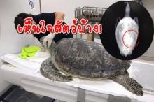 สัตวแพทย์หญิง วอนอย่าโยนเหรียญลงบ่อเลี้ยงสัตว์น้ำ หลังพบเต่ากินเหรียญจนป่วยหนัก!