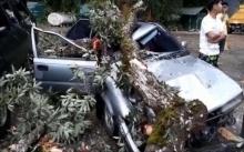 สุดระทึก!!! ต้นไม้ล้มทับเก๋งกระบะ 3 คัน หน้าวัดพระธาตุฯ รถยับนึกว่าตาย! กับรอดตายปาฏิหาริย์!