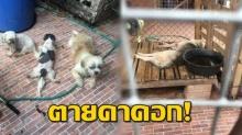 บุกบ้านช่วยหมา!! ชาวบ้านพบเจ้าของขังทิ้งในบ้าน 6 ชีวิต จนไซบีเรียนตายคาคอก!!