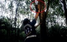 เผ่นป่าราบ!! พบศีรษะมนุษย์เป็นผู้หญิงผมยาวเสียบอยู่บนต้นยาง สยอง!! (มีคลิป)