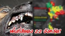 เปิดพื้นที่สีแดง 22 จังหวัด โรคพิษสุนัขบ้าระบาด ล่าสุดเสียชีวิตแล้ว 3 ราย