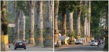 คุม 5 ปี ถ.ต้นยาง เชียงใหม่-ลำพูน ถนนโบราณสายประวัติศาสตร์