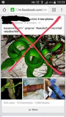 เข้าใจกันใหม่!! อ.เจษฎายัน งูหนุมาณ พิษร้ายจนขาไหม้ ... เป็นเรื่องมั่วครับ