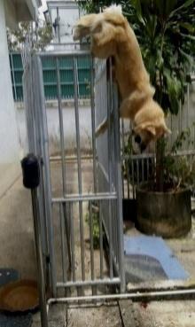 สลดใจคนรักหมา!! หมาถูกรั้วเสียบข้ามคืน..เจ้าของปล่อยตายอนาถ