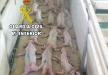 สอบคนงานถ่ายคลิปเล่นโดดทับลูกหมูจนตาย 72 ตัว