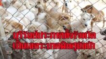 บุรีรัมย์ประกาศเป็นเขตระบาดพิษสุนัขบ้าทั้งจังหวัด เหตุโดนตัดงบซื้อวัคซีนป้องกัน