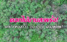 ตื่นตา! นกปากห่างกว่า 30,000 ตัวอพยพ มองไกลๆนึกว่าดอกไม้บานสะพรั่ง! (คลิป)