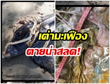 .I.P. ทะเลระรอง เต่ามะเฟืองถูกใบจักรเรือบาดตาย ซ้ำในกระเพาะพลาสติกเพียบ