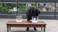 สุนัขแสนรู้ทายผลฟุตบอลยูโรถูกทุกนัด ! ล่าสุดทายว่าทีมไหนมาดู!!