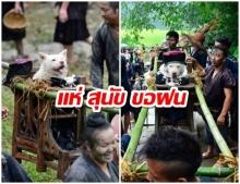 """หากไทยมี """"แห่นางแมว"""" ชนชาติเหมียวในจีนก็มีพิธี """"แห่สุนัข"""" ขอฝนเหมือนกัน"""