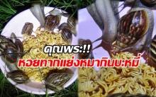 มันจะหิวๆหน่อย!! หอยทากนับ 10 ตัว แย่งหมากินบะหมี่กึ่งสำเร็จรูปหลังร้านอาหาร!