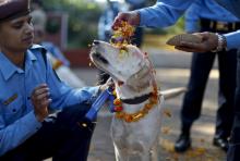 เทศกาลบูชาสุนัข อีกหนึ่งกิจกรรมน่ารักในประเทศเนปาล